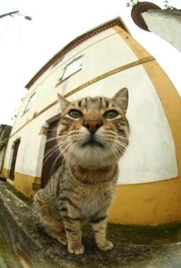Обзор кота на камеру : интернет магазин автозвука и аксессуаров kSize.ru